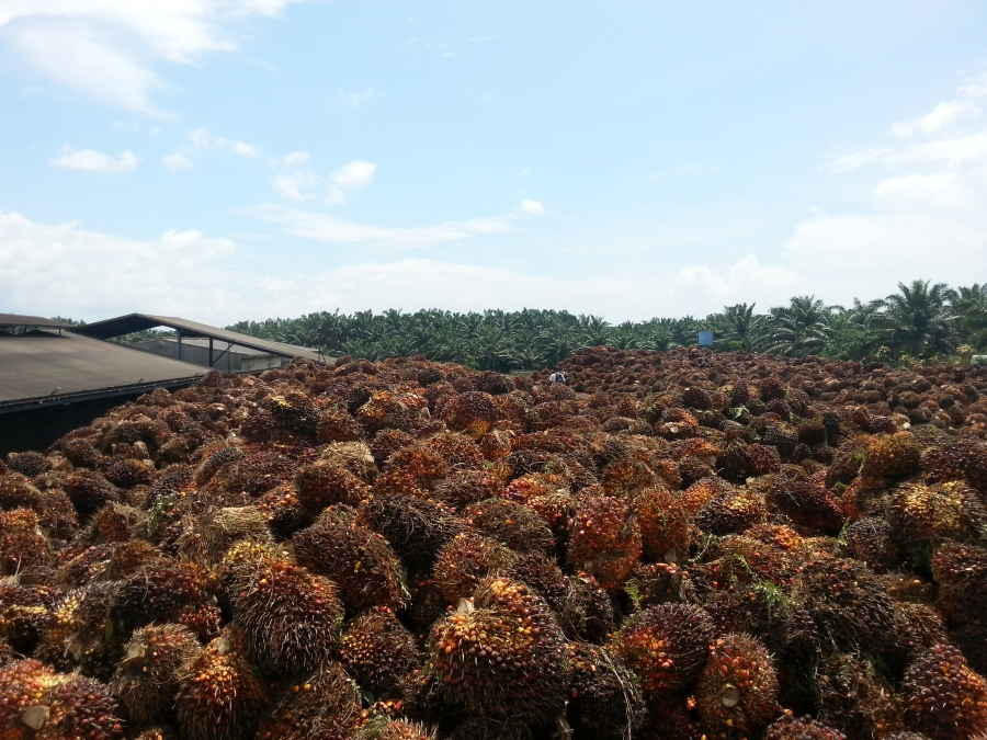 Who uses Palm Oil?